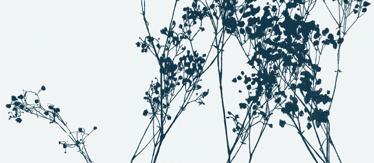 Botanical drawing in greys, whites and navy.